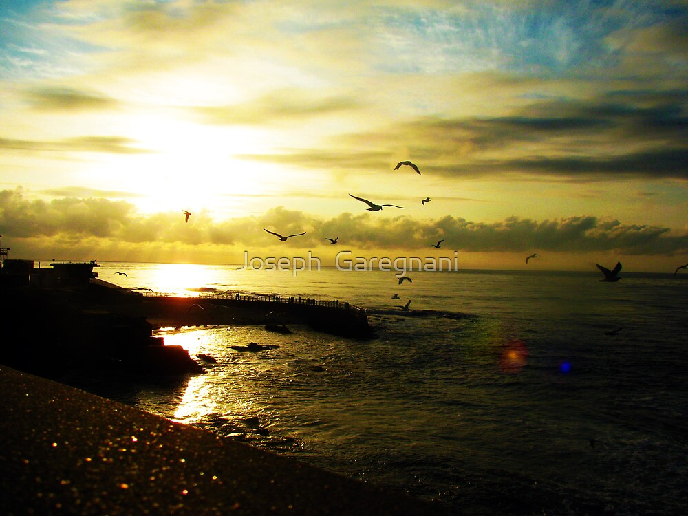Fight of seagulls by Joseph  Garegnani