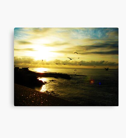 Fight of seagulls Canvas Print