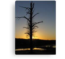 Silhoutte on The Tree Canvas Print