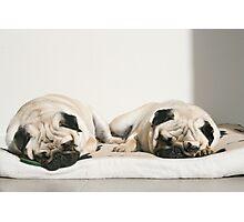 Let Sleeping Pugs Lie Photographic Print