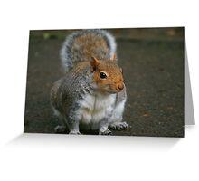 Wheres ya nuts Mr Squirrel  Greeting Card