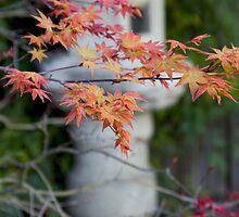 Japanese Maple Shrine - Huntington Gardens, CA - 2011 by dirtfaery