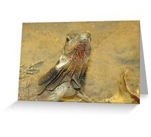 Frilled neck lizard, Australia Greeting Card