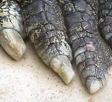 Crocodile toes, Australia by Martina Nicolls