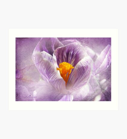 Crocus with cracks Art Print