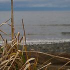 Beach Grasses by Tracie Skarbo