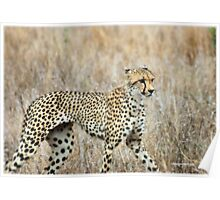 A MOMENT IN TIME - THE CHEETAH Poster