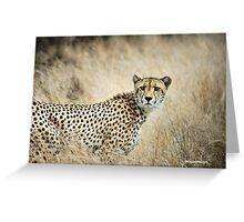 A MOMENT IN TIME - THE CHEETAH - Acinonyx jubatus Greeting Card