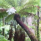 Soft Tree fern by Redviolin
