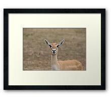 Doe Framed Print