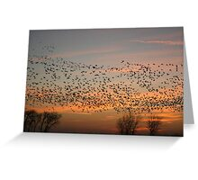flock of geese at sunset Greeting Card