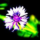Artsy Flower by Carrie Bonham