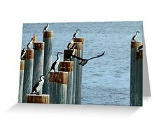 cormorants convention Greeting Card