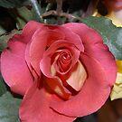 Rosy Got  Roses by Rozalia Toth