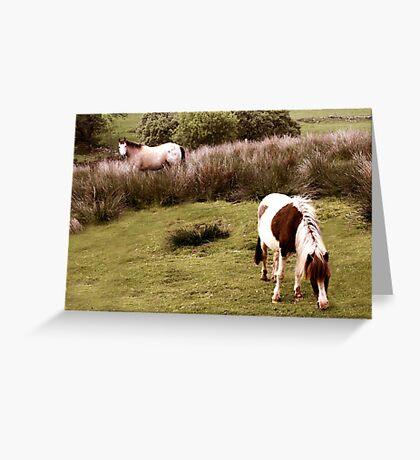 Dartmoor Pony and foal Greeting Card