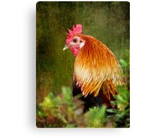 Fancy Fowl Canvas Print
