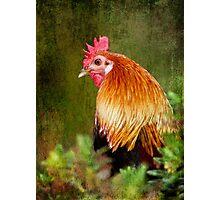 Fancy Fowl Photographic Print