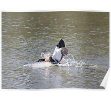 Bird takeoff Poster