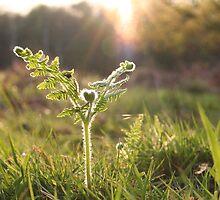Sunlit fern - Richmond park by Pat Leamon