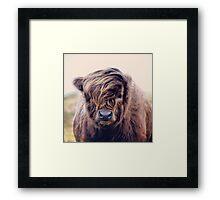 Highlander with style Framed Print