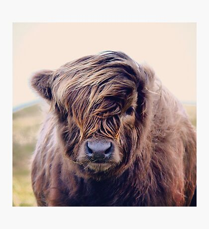 Highlander with style Photographic Print