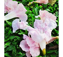 Pink Flower On Green Grass Photographic Print