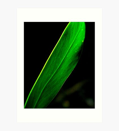 Leaves..... Art Print