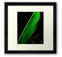 Leaves..... Framed Print