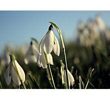 Snowdrops #2 Photographic Print