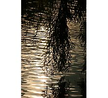Weeping Willow Silhouette by Water Photographic Print