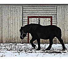 Winter Draft Photographic Print