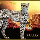 A MOMENT IN TIME - The Cheetah Collection by Magaret Meintjes