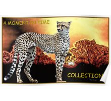 A MOMENT IN TIME - THE CHEETAH COLLECTION Poster