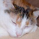 Sleepyhead by vbk70