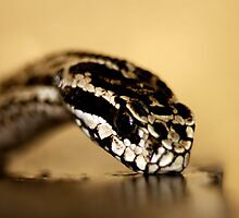 Drinking viper. by MiqeMorbid