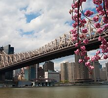 Cherry Blossoms Under the Queensborough Bridge 2 by W. Lotus