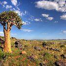 Quiver Tree #2 by Rudi Venter