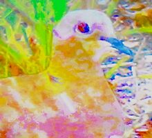 Early morning mourning dove by ♥⊱ B. Randi Bailey