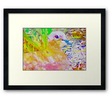 Early morning mourning dove Framed Print
