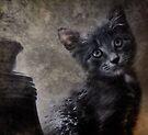Little Conway Kitty by luckylarue