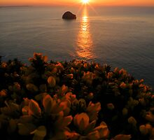 Cornwall: Gorse in the Sunset by Rob Parsons
