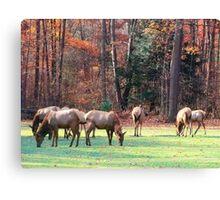 Herd of Seven Canvas Print