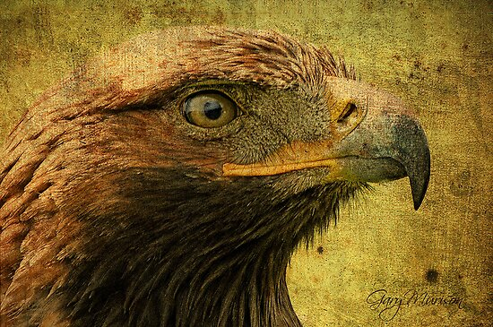 Golden Eagle by Gary Murison