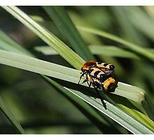 Bug Photographic Print