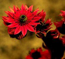 A desert roze for you by Alan Mattison
