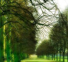 Avenue by Paul Richards