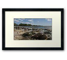 Horseshoe crabs Framed Print