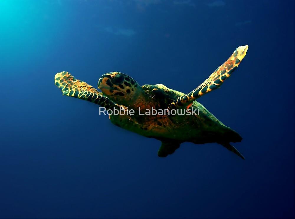 Hawksbill Turtle by Robbie Labanowski