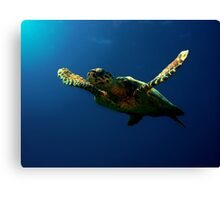 Hawksbill Turtle Canvas Print