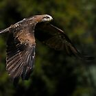 Kite In Flight by Stephen Ruane